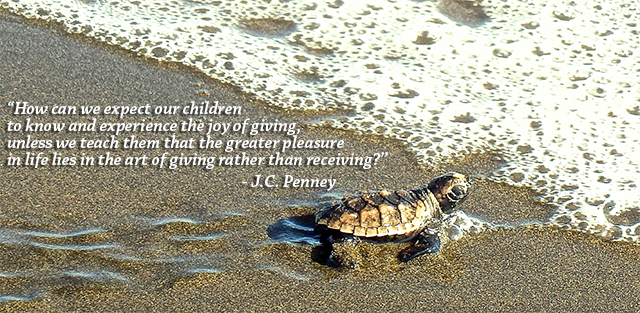 Header-Image-Turtle-JC_Penney